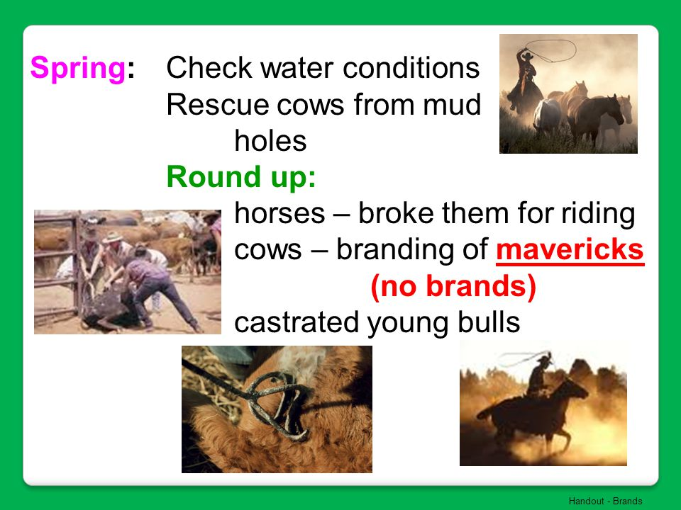 Spring: Check water conditions Rescue cows from mud holes Round up: horses – broke them for riding cows – branding of mavericks (no brands) castrated
