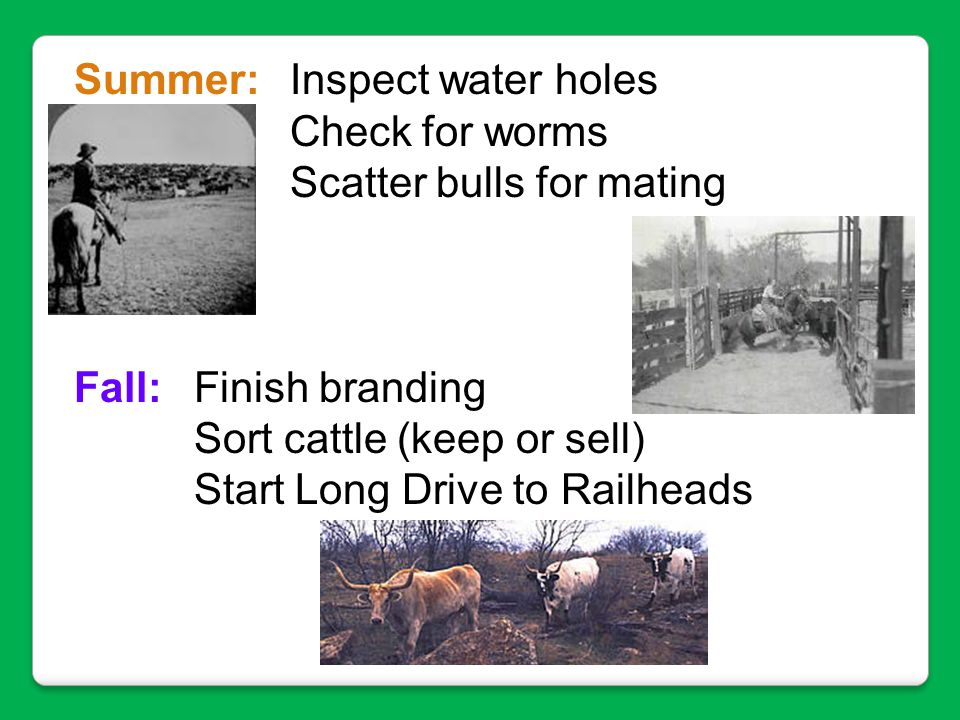 Summer: Inspect water holes Check for worms Scatter bulls for mating Fall: Finish branding Sort cattle (keep or sell) Start Long Drive to Railheads