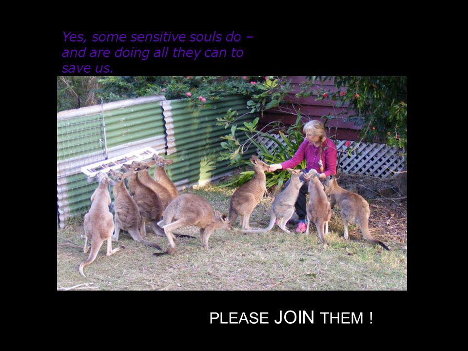 Yes, some sensitive souls do – and are doing all they can to save us. PLEASE JOIN THEM !