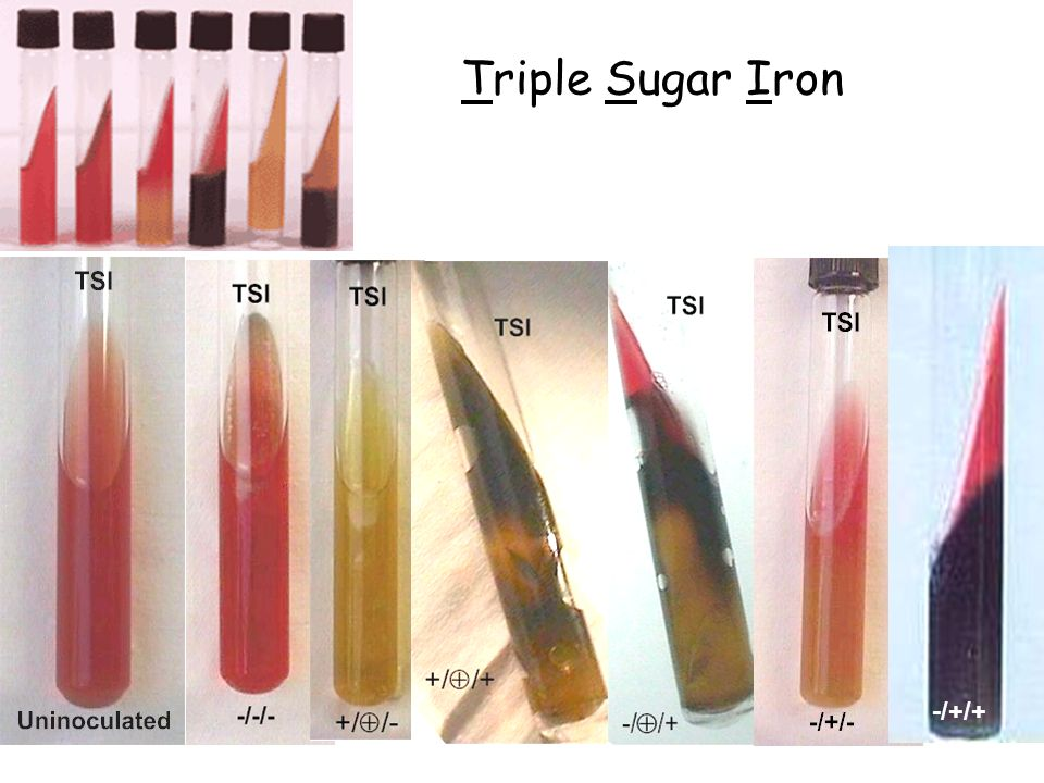 Triple Sugar Iron -/+/+