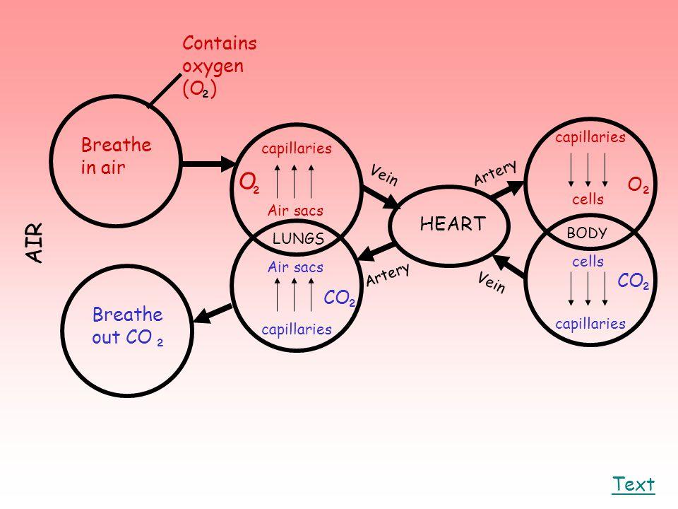 Text Breathe in air Breathe out CO ² O ² capillaries Air sacs LUNGS capillaries Air sacs ² CO HEART capillaries cells BODY ² ² ² O CO Vein Artery Cont