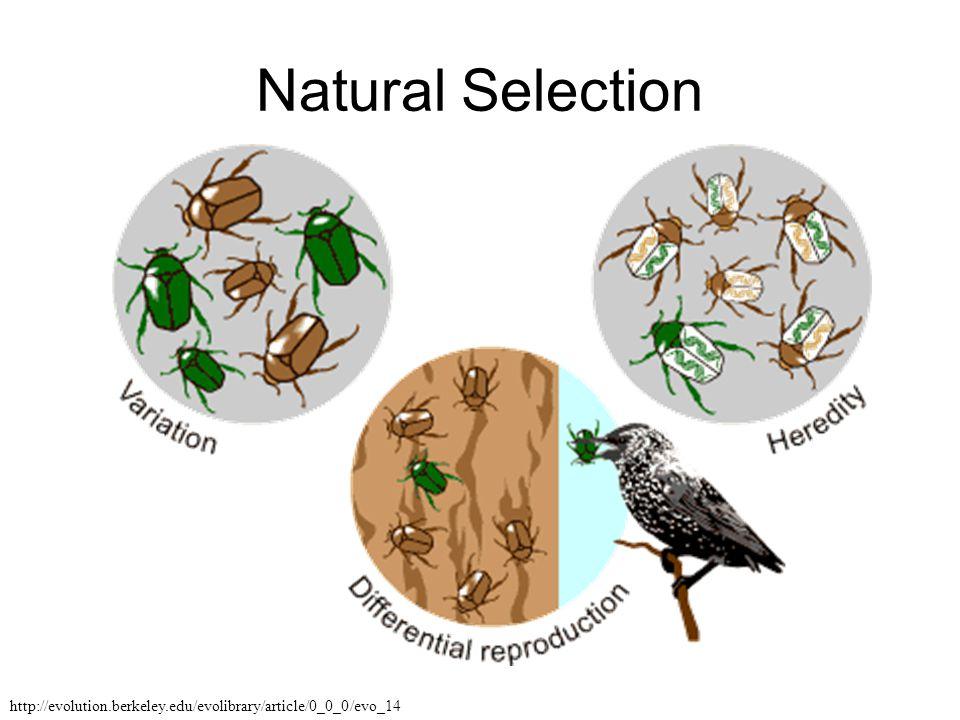 Natural Selection http://evolution.berkeley.edu/evolibrary/article/0_0_0/evo_14
