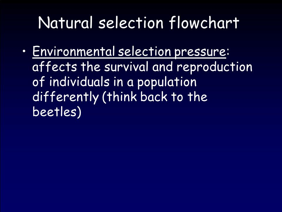 Natural selection flowchart Environmental selection pressure: affects the survival and reproduction of individuals in a population differently (think back to the beetles)