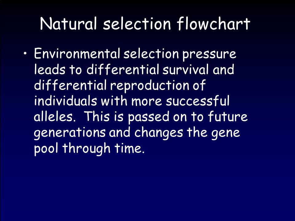Natural selection flowchart Environmental selection pressure leads to differential survival and differential reproduction of individuals with more successful alleles.