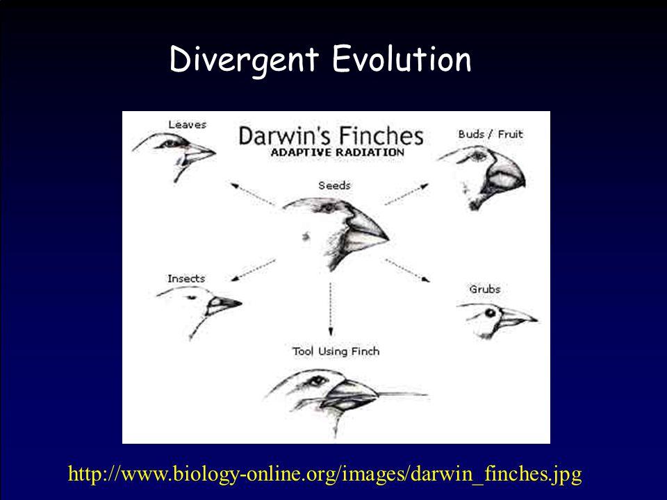 Divergent Evolution http://www.biology-online.org/images/darwin_finches.jpg
