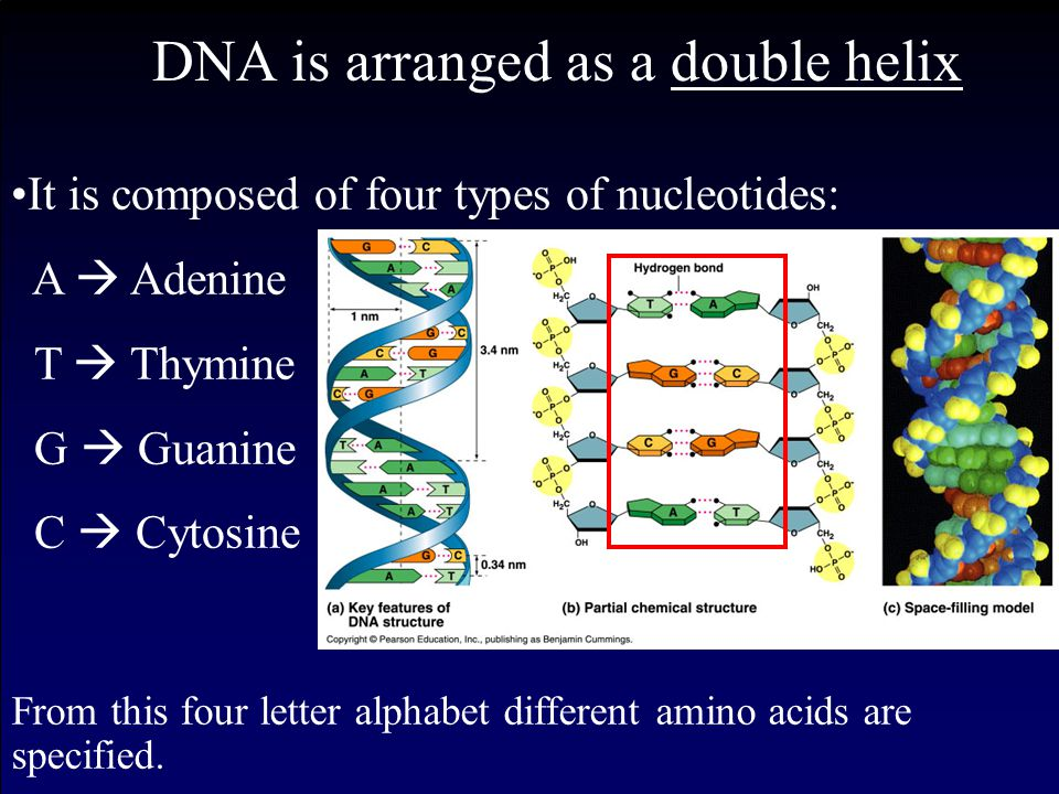 Genes are a particular segment of DNA, that code for a protein (usually). Junk DNA