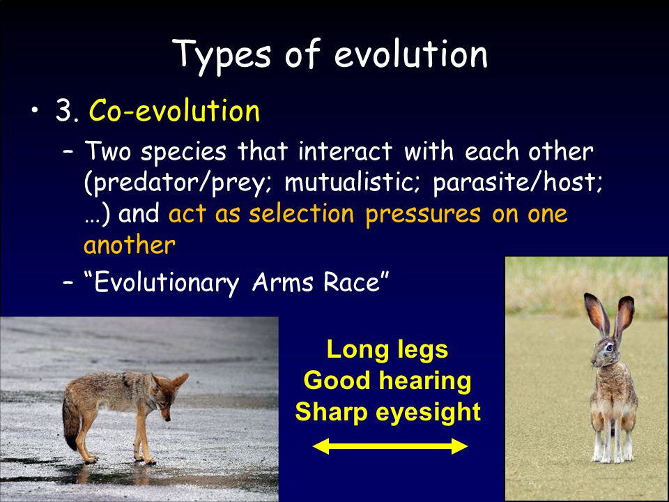 Types of evolution 3.