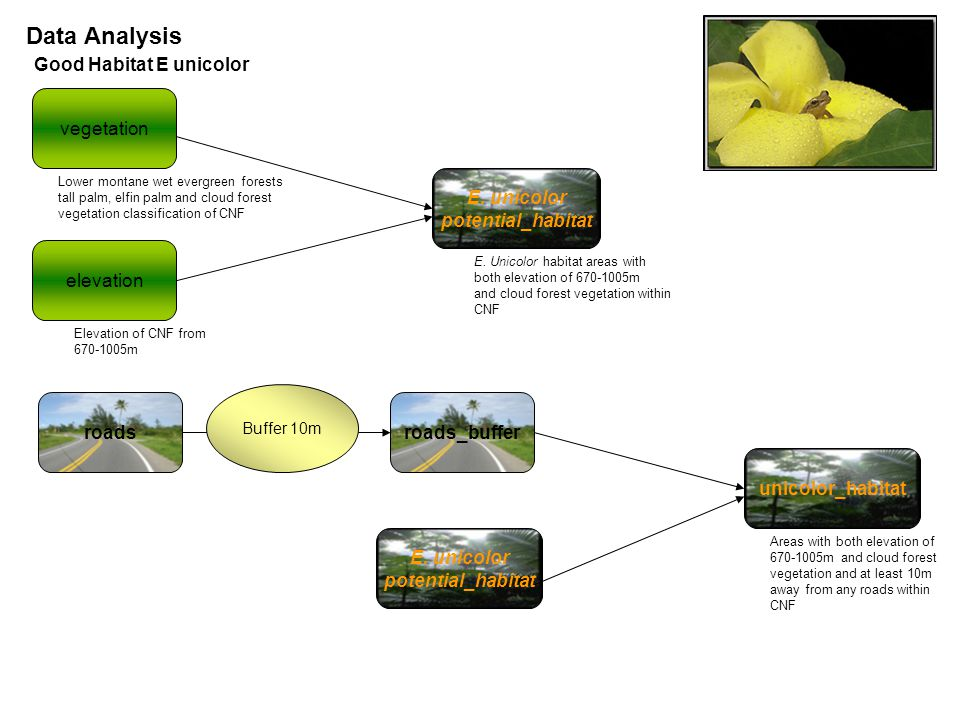 Data Analysis Good Habitat E unicolor roadsroads_buffer E.