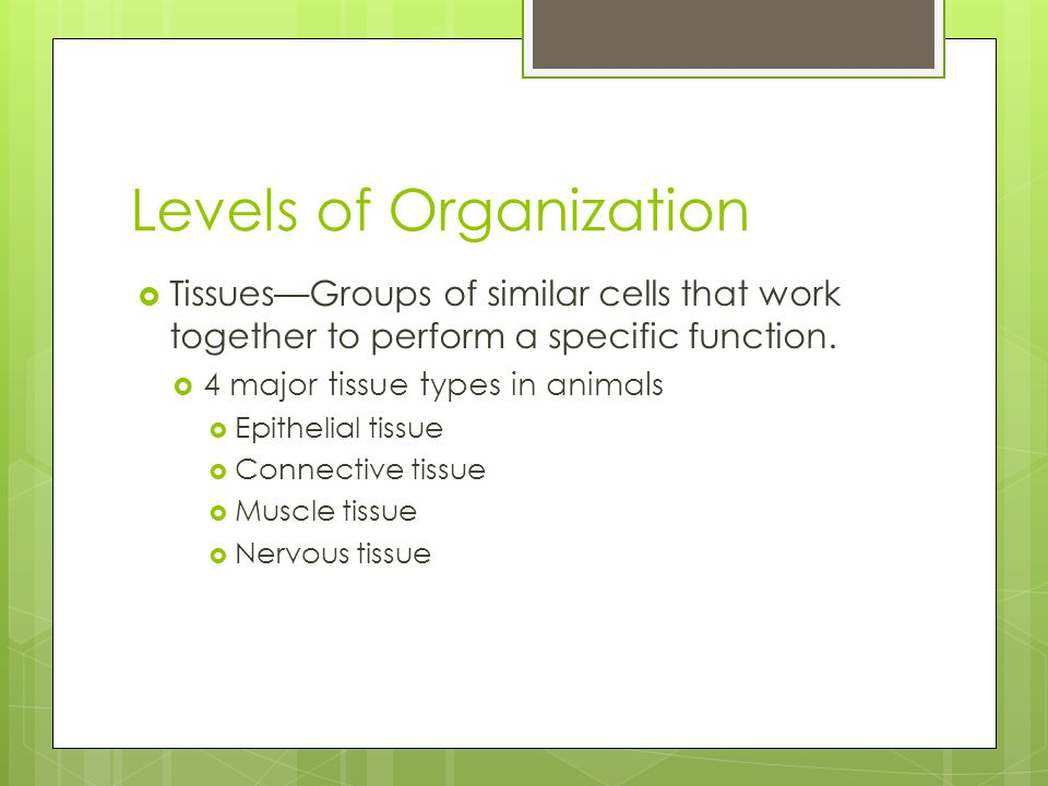 Levels of Organization  Tissues—Groups of similar cells that work together to perform a specific function.  4 major tissue types in animals  Epithe