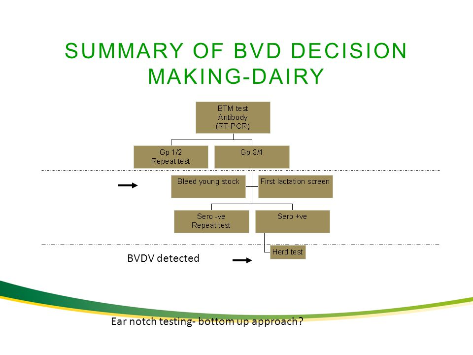 SUMMARY OF BVD DECISION MAKING-DAIRY BVDV detected Ear notch testing- bottom up approach?