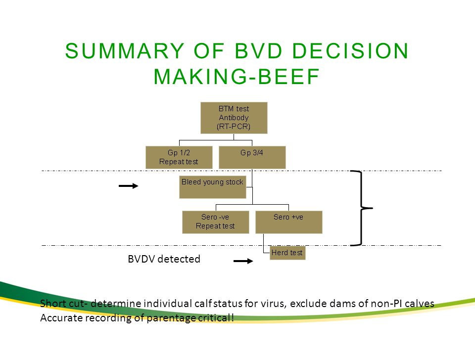 SUMMARY OF BVD DECISION MAKING-BEEF BVDV detected Short cut- determine individual calf status for virus, exclude dams of non-PI calves Accurate recording of parentage critical!