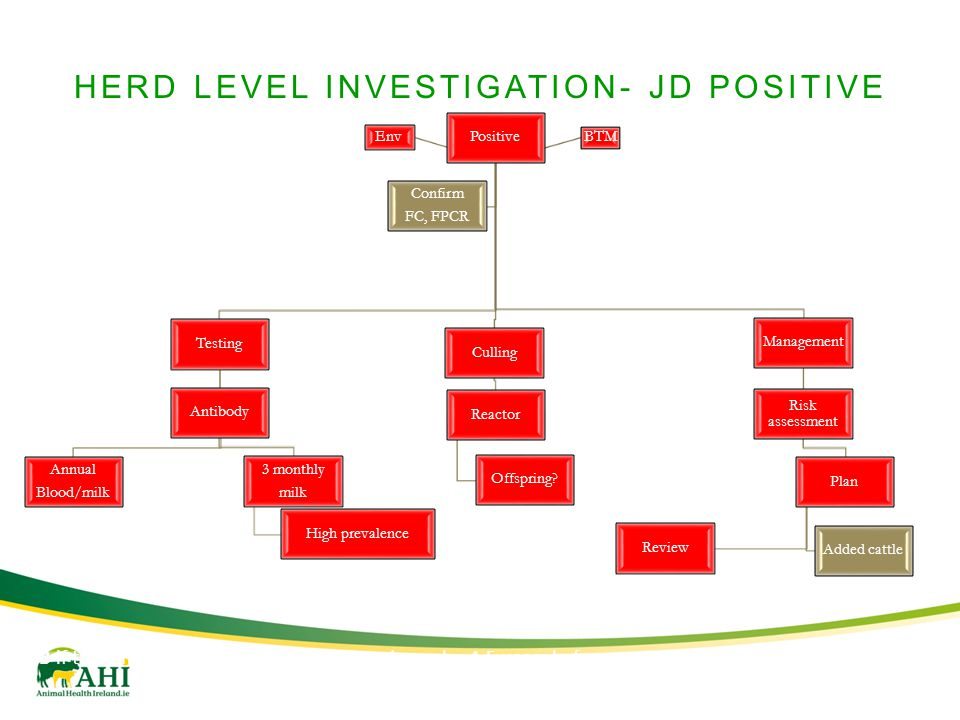 HERD LEVEL INVESTIGATION- JD POSITIVE Positive Testing Antibody Annual Blood/milk 3 monthly milk High prevalence Culling Reactor Offspring.