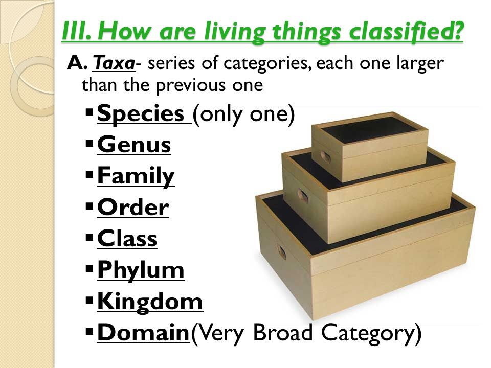 III. How are living things classified? A. Taxa- series of categories, each one larger than the previous one  Species (only one)  Genus  Family  Or