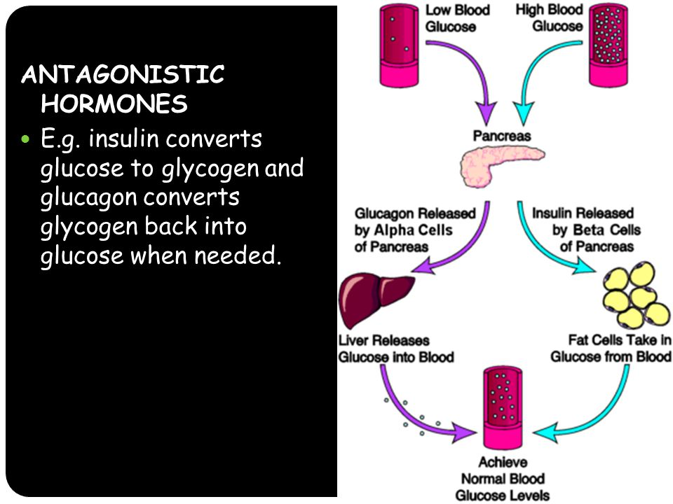 ANTAGONISTIC HORMONES E.g. insulin converts glucose to glycogen and glucagon converts glycogen back into glucose when needed.