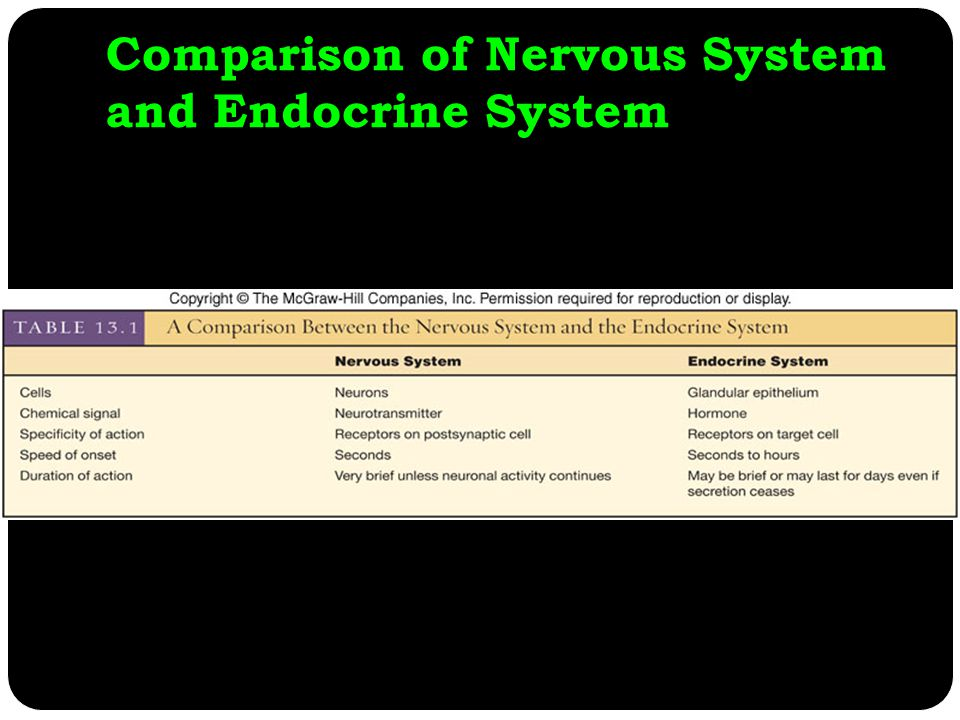 Comparison of Nervous System and Endocrine System