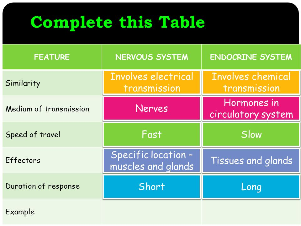 Complete this Table FEATURENERVOUS SYSTEMENDOCRINE SYSTEM Similarity Medium of transmission Speed of travel Effectors Duration of response Example Involves electrical transmission Involves chemical transmission Hormones in circulatory system Nerves Slow Fast Tissues and glands Specific location – muscles and glands Long Short