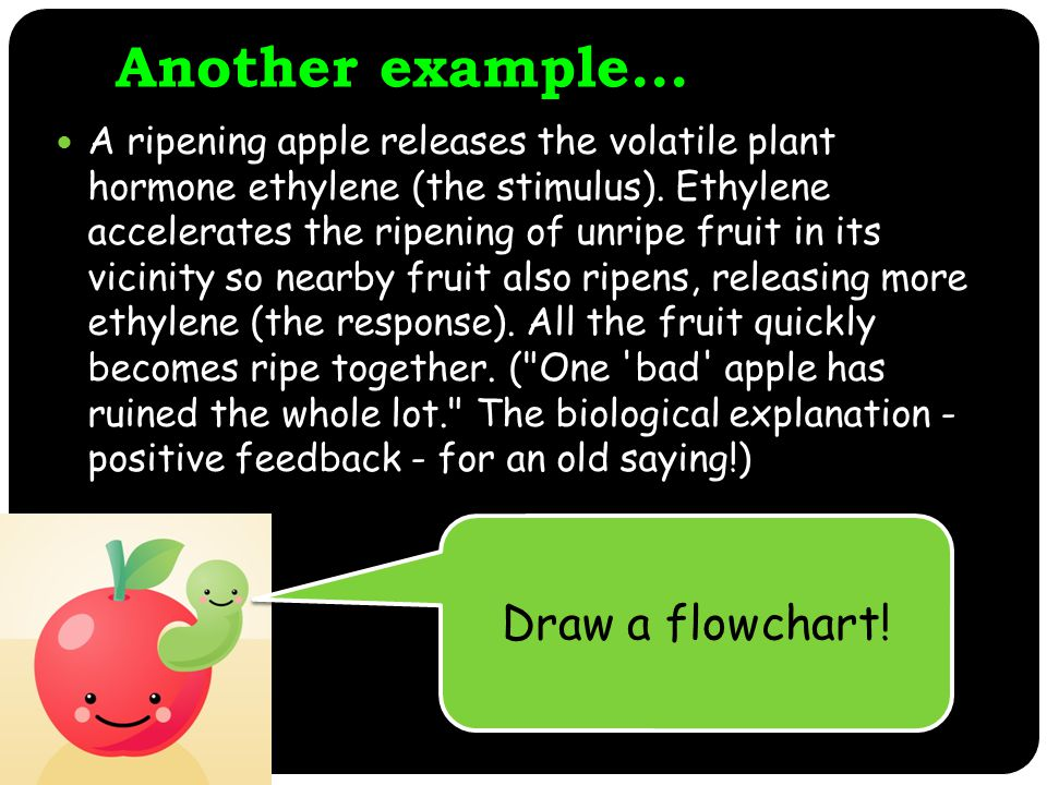 Another example...A ripening apple releases the volatile plant hormone ethylene (the stimulus).
