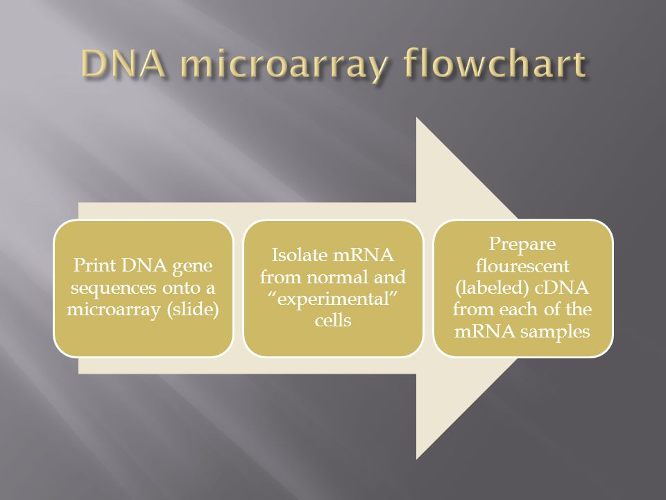 """Print DNA gene sequences onto a microarray (slide) Isolate mRNA from normal and """"experimental"""" cells Prepare flourescent (labeled) cDNA from each of t"""