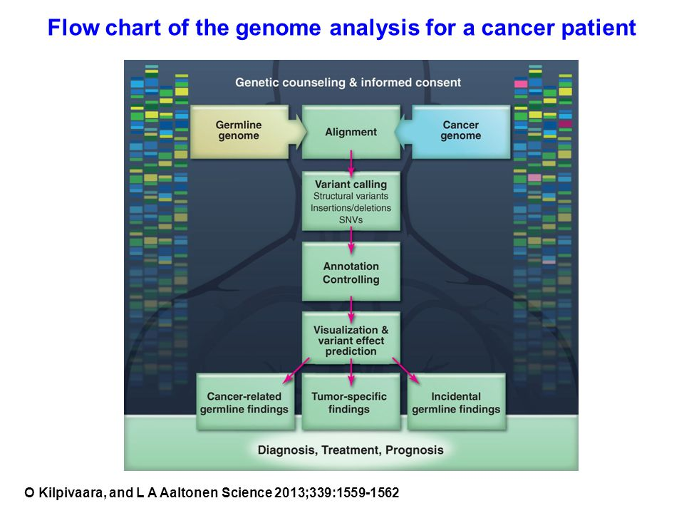 Flow chart of the genome analysis for a cancer patient O Kilpivaara, and L A Aaltonen Science 2013;339:1559-1562