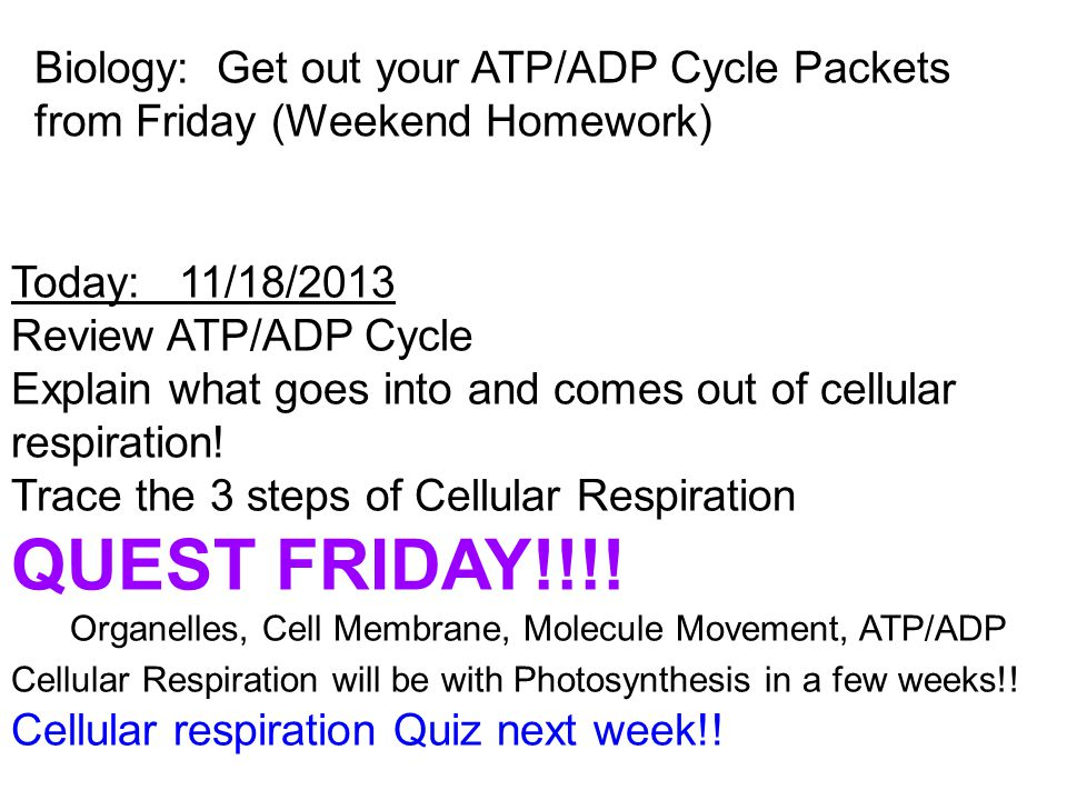 Today: 11/18/2013 Review ATP/ADP Cycle Explain what goes into and comes out of cellular respiration! Trace the 3 steps of Cellular Respiration QUEST F
