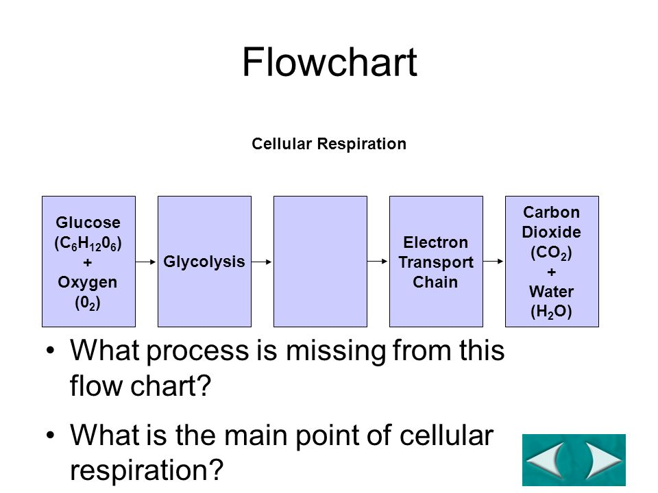 Flowchart Section 9-2 Glucose (C 6 H 12 0 6 ) + Oxygen (0 2 ) Glycolysis Electron Transport Chain Carbon Dioxide (CO 2 ) + Water (H 2 O) Go to Section: Cellular Respiration What process is missing from this flow chart.