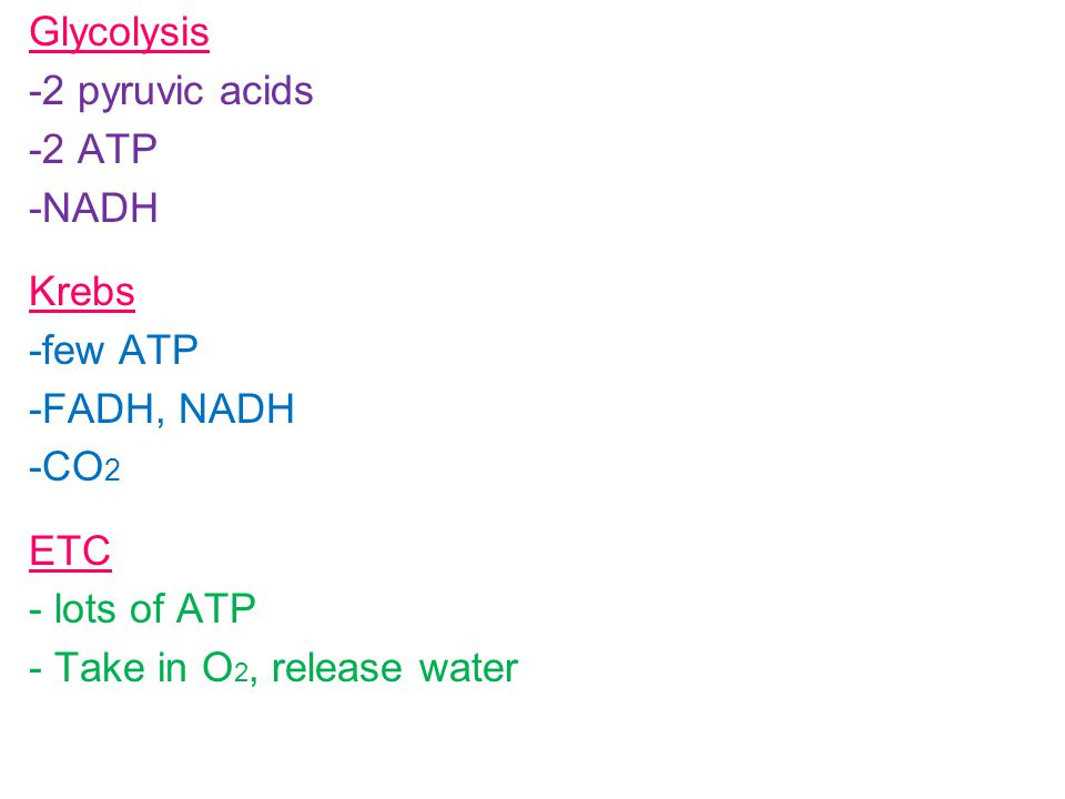 Glycolysis -2 pyruvic acids -2 ATP -NADH Krebs -few ATP -FADH, NADH -CO 2 ETC - lots of ATP - Take in O 2, release water