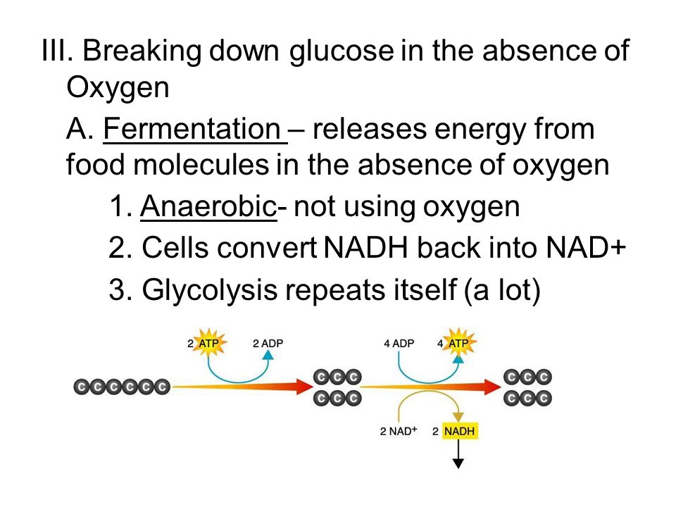 III. Breaking down glucose in the absence of Oxygen A.