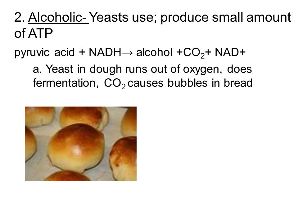 2. Alcoholic- Yeasts use; produce small amount of ATP pyruvic acid + NADH→ alcohol +CO 2 + NAD+ a.