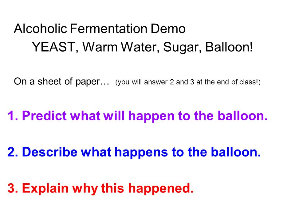 Alcoholic Fermentation Demo YEAST, Warm Water, Sugar, Balloon.