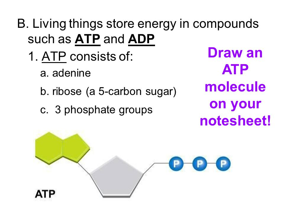 B. Living things store energy in compounds such as ATP and ADP 1.