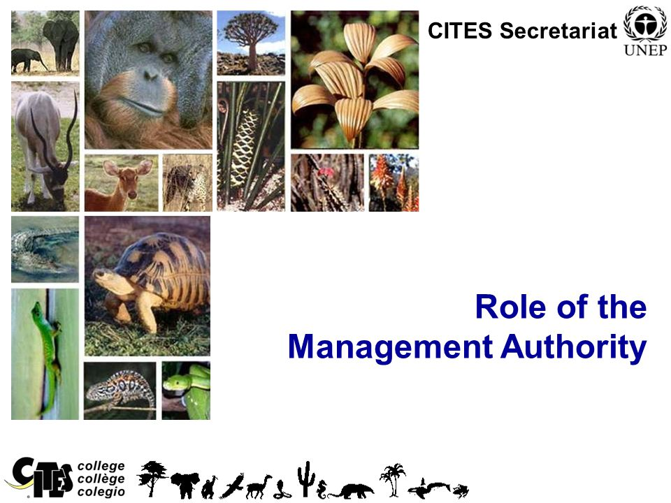 1 Role of the Management Authority CITES Secretariat