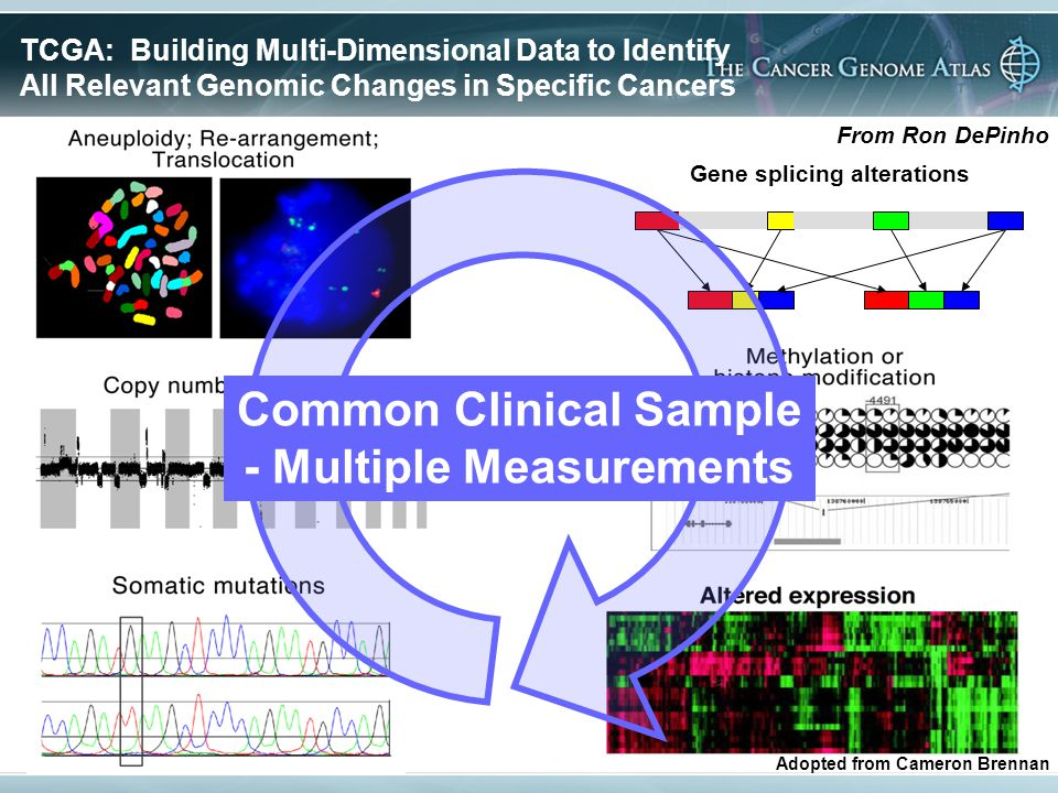 Gene splicing alterations Common Clinical Sample - Multiple Measurements TCGA: Building Multi-Dimensional Data to Identify All Relevant Genomic Changes in Specific Cancers Adopted from Cameron Brennan From Ron DePinho