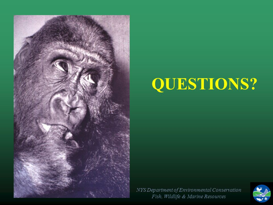 NYS Department of Environmental Conservation Fish, Wildlife & Marine Resources QUESTIONS