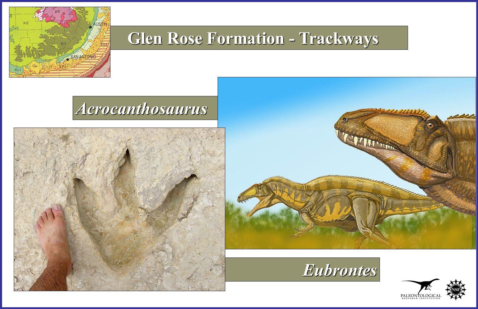 Acrocanthosaurus Eubrontes Eubrontes