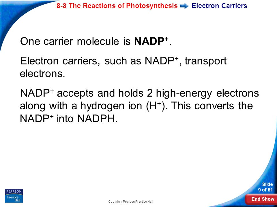End Show Slide 9 of 51 8-3 The Reactions of Photosynthesis Copyright Pearson Prentice Hall Electron Carriers One carrier molecule is NADP +.