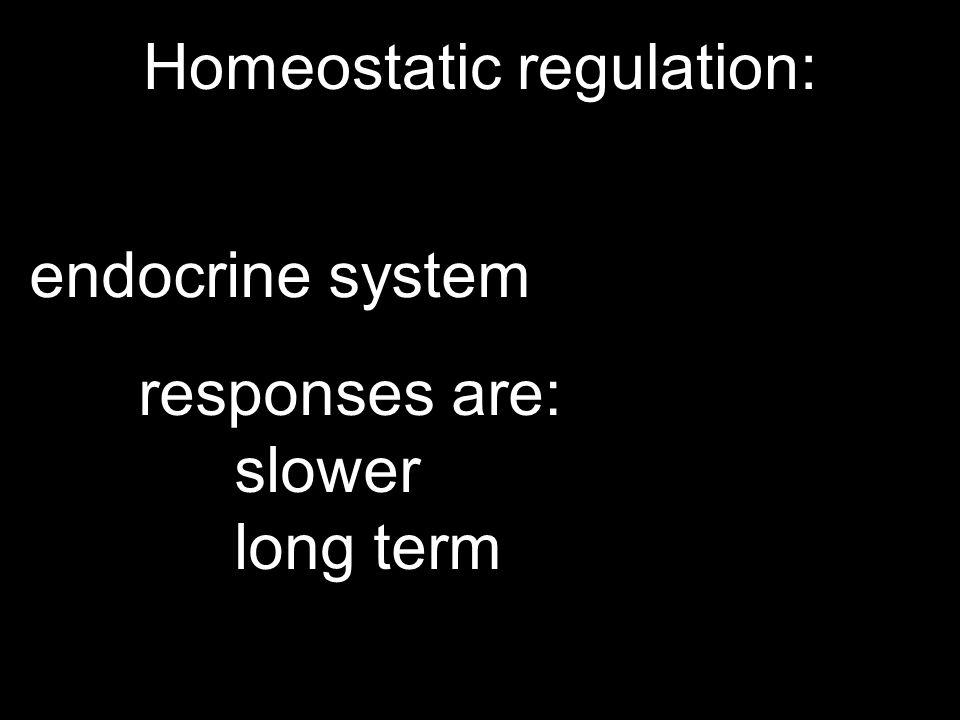 Homeostatic regulation: endocrine system responses are: slower long term