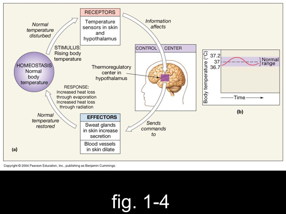 fig. 1-4
