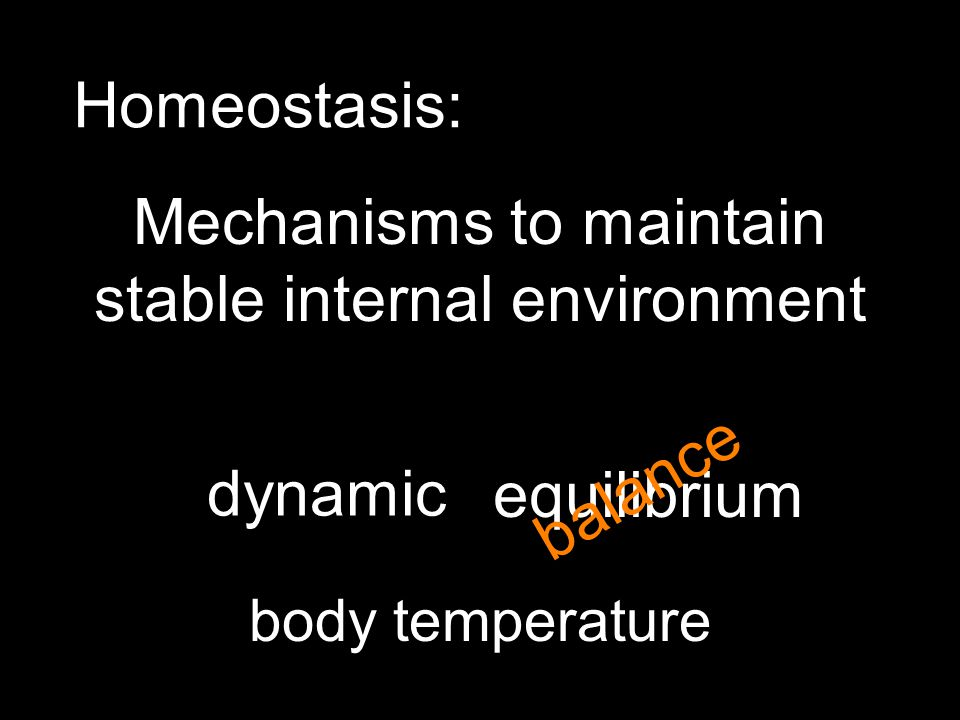 Homeostasis: Mechanisms to maintain stable internal environment equilibrium body temperature balance dynamic