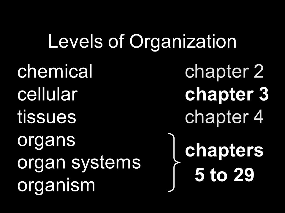 Levels of Organization chemical cellular tissues organs organ systems organism chapter 2 chapter 3 chapter 4 chapters 5 to 29