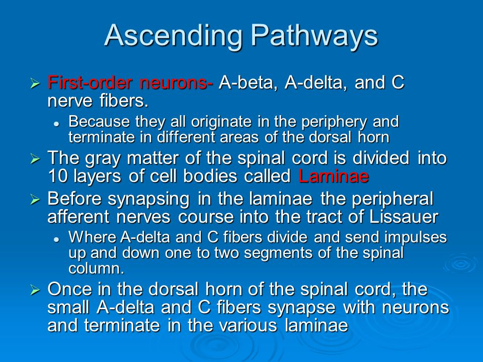 Ascending Pathways  First-order neurons- A-beta, A-delta, and C nerve fibers. Because they all originate in the periphery and terminate in different