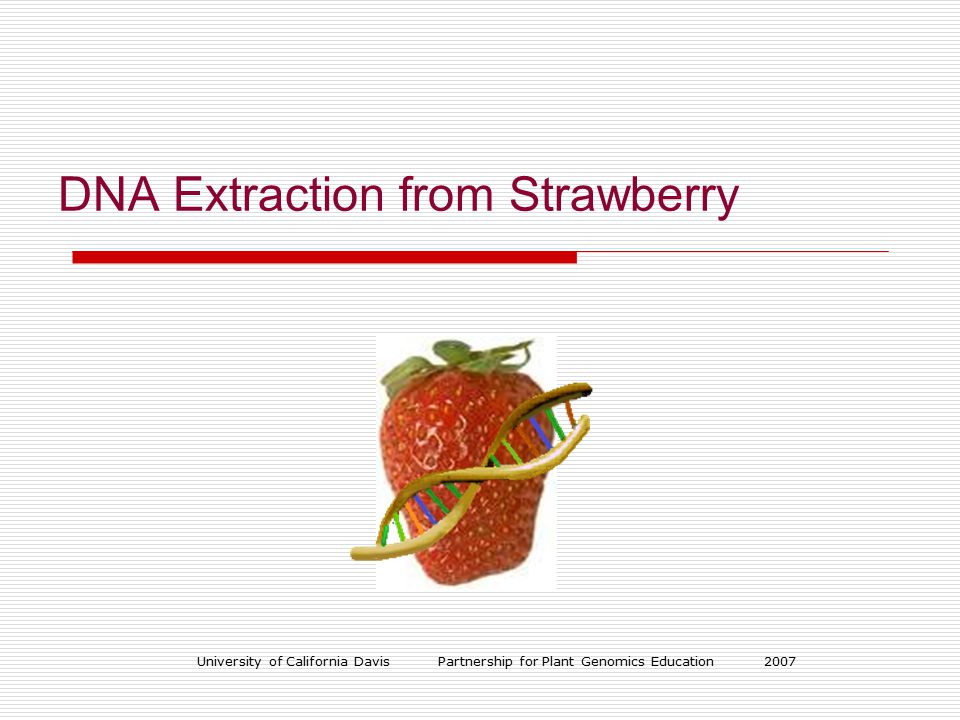 University of California Davis Partnership for Plant Genomics Education 2007 DNA Extraction from Strawberry