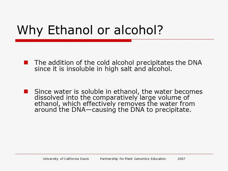 University of California Davis Partnership for Plant Genomics Education 2007 Why Ethanol or alcohol? The addition of the cold alcohol precipitates the
