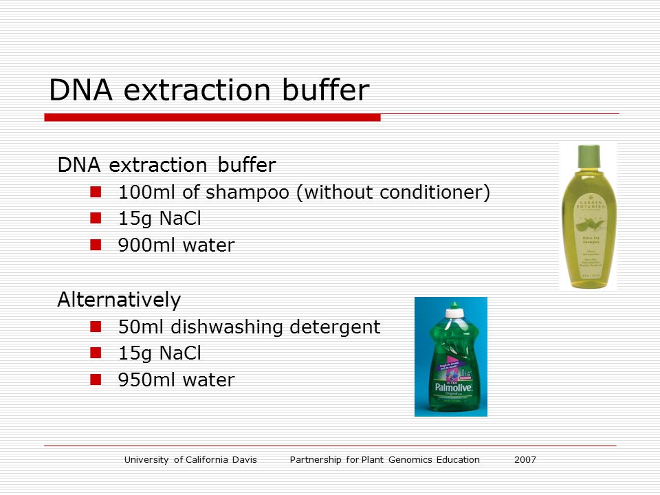 University of California Davis Partnership for Plant Genomics Education 2007 DNA extraction buffer 100ml of shampoo (without conditioner) 15g NaCl 900