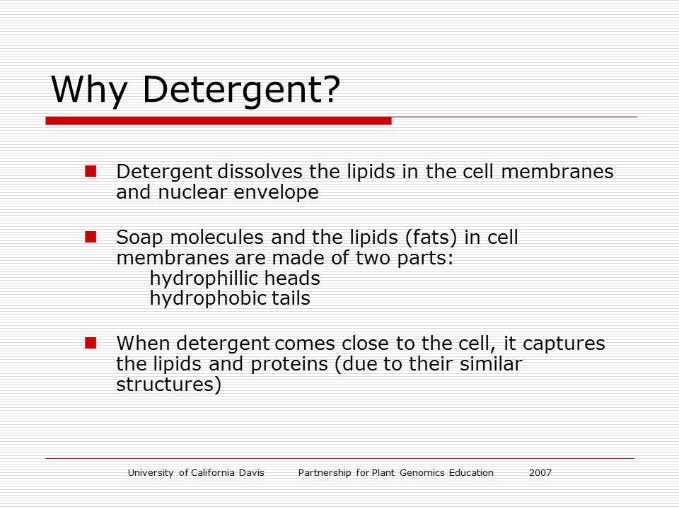 University of California Davis Partnership for Plant Genomics Education 2007 Plant cell membrane- phospholipid bilayer How detergent disrupts the plant cell membrane