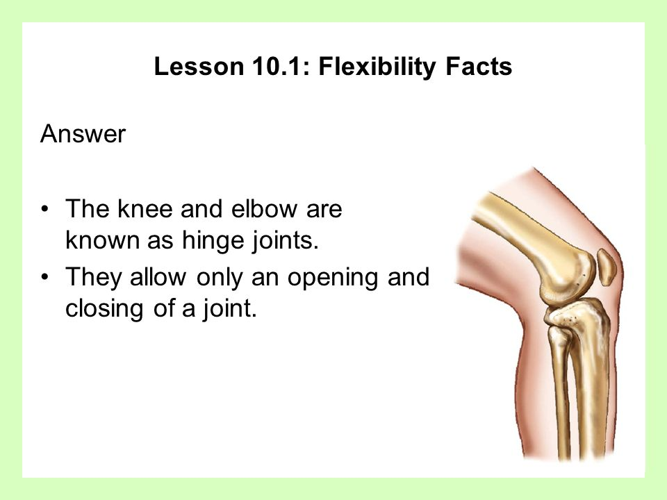 Lesson 10.1: Flexibility Facts Answer The knee and elbow are known as hinge joints.