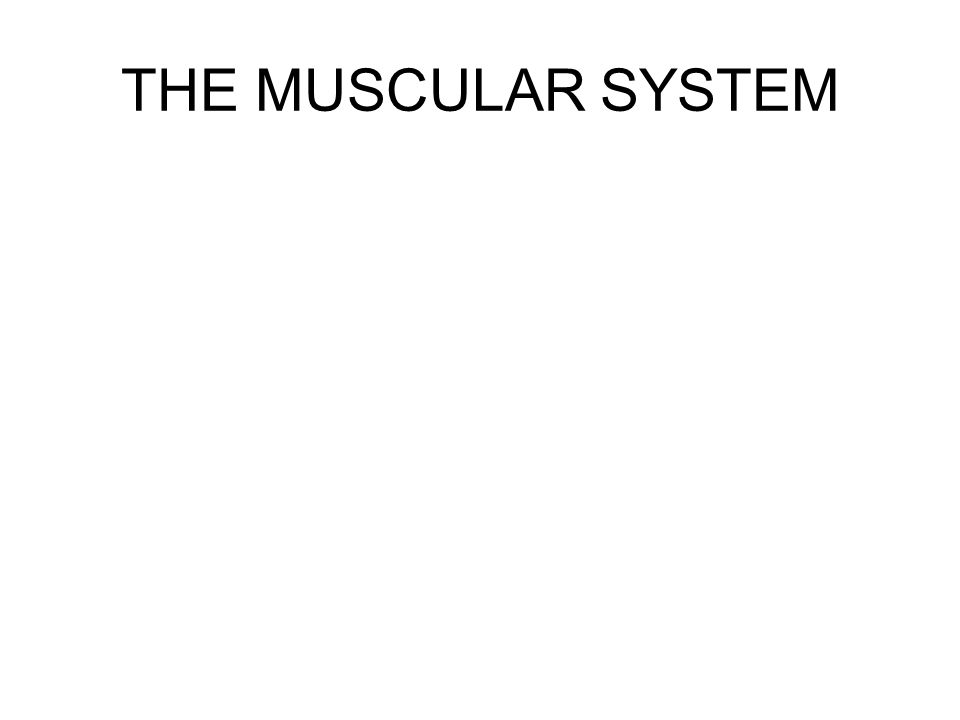 INTERACTIONS OF SKELETAL MUSCLES IN THE BODY Muscles only pull; they are not capable of pushing –Generally as a muscle shortens, its insertion (attachment on the movable bone) moves toward its origin (its fixed or immovable point of attachment) Muscles can be classified into four functional groups: –1.Prime Movers: The muscle that provides the major force for the specific movement is called the prime mover or the agonist, of that movement –The biceps brachii muscle, which fleshes out the anterior arm (and inserts on the radius), is a prime mover of elbow flexion –2.Antagonists: Muscles that oppose or reverse a particular movement When a prime mover is active, the antagonist muscles are often stretched and may be relaxed Can also help to regulate the action of a prime mover by contracting to provide some resistance, thus helping to prevent overshoot or to slow or stop the movement Prime mover and its antagonist are located on opposite sides of the joint across which they act Antagonists can also be prime movers in their own right –Example: flexion of the forearm by the biceps brachii muscle of the arm is antagonized by the triceps brachii, the prime mover for extending the forearm