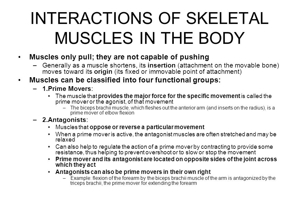 INTERACTIONS OF SKELETAL MUSCLES IN THE BODY 3.Synergists: –Help the prime movers by: Adding a little extra force to the same movement Or reducing undesirable or unnecessary movements that might occur as the prime mover contracts –When a muscle crosses two or more joints, its contraction causes movement at all of the spanned joints unless other muscles act as joint stabilizers »Example: the finger flexor muscles cross both the wrist and the phalangeal joints, but you can make a fist without bending your wrist because synergistic muscles stabilize the wrist –As some flexors act, undesirable rotation movements occur »Synergists can prevent this, allowing all of the prime mover's force to be exerted in the desired direction