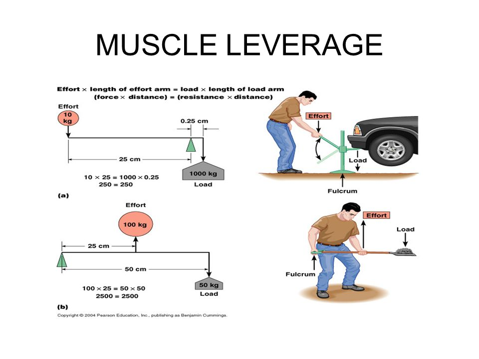 MUSCLE LEVERAGE