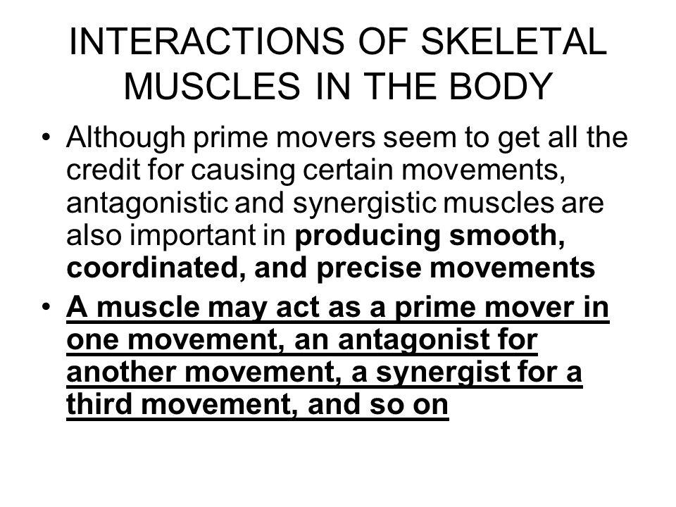 NAMING SKELETAL MUSCLES 1.