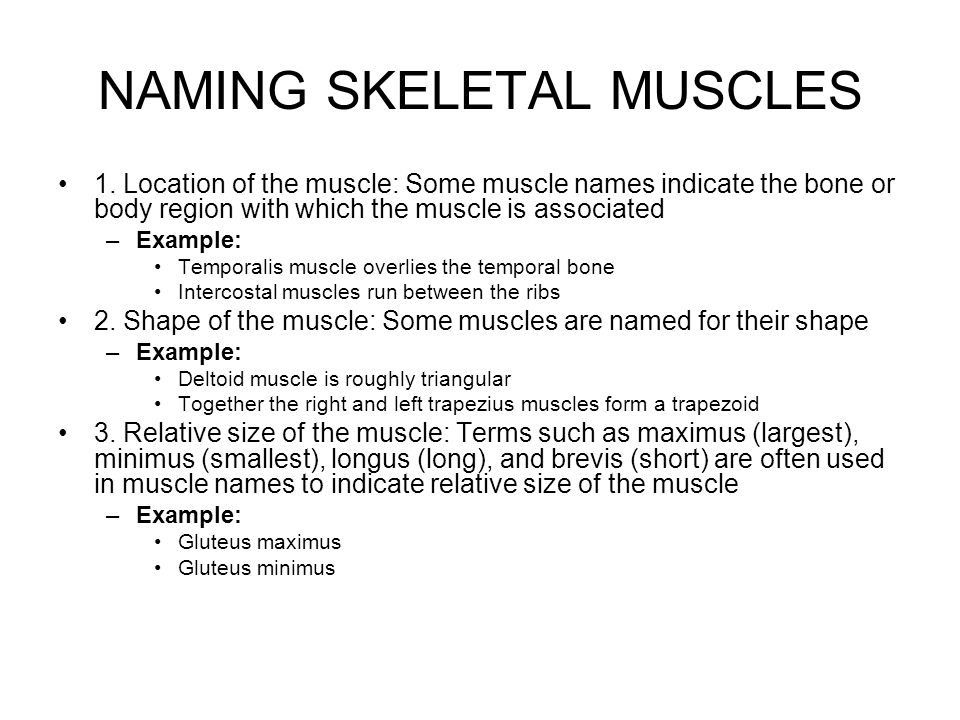 NAMING SKELETAL MUSCLES 1. Location of the muscle: Some muscle names indicate the bone or body region with which the muscle is associated –Example: Te